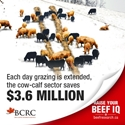 BCRC_fact_4_extendedgrazing_600x600.jpg